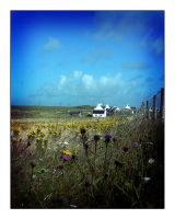 TIREE FIELDS AND FLOWERS by rosebud10