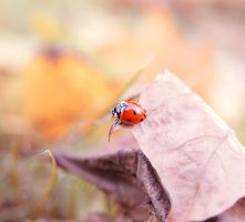 On the autumn leaf by marteczna