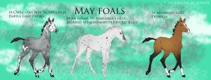 May Foals by Schn3e