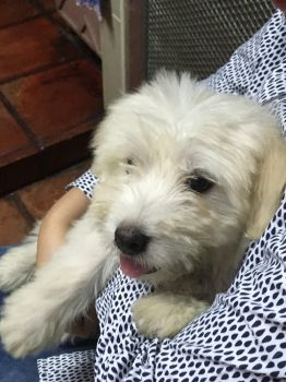 MEET OUR PUPPY, TEMMIE by B1BattleDroid