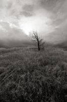 Solitude 2 by PhotoPurist