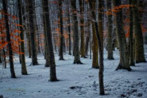 Winter forest.......hide and seek. by Phototubby