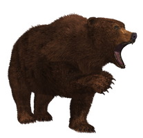 Brown Bear 01 PNG Stock by Roy3D