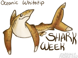 Oceanic whitetip by Pokeaday