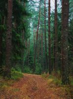 Path in the forest by veronika-schnek