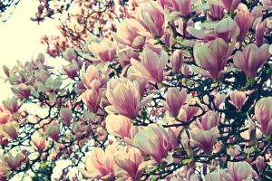 spring by DeZzibELl