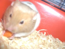 my hamster pumpkin by dottylola