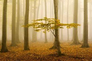 ..autumn5.. by tbencik-photography