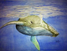Blue Whale by Supach