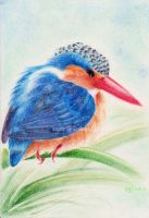 The king in pastels by toujin