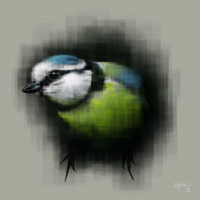 Blue Tit by dankershaw