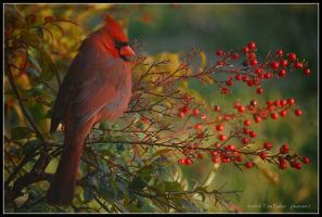 red on red by photom17