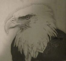 Eagle by Fishieart