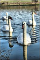 Swan Lake 2 by neith13