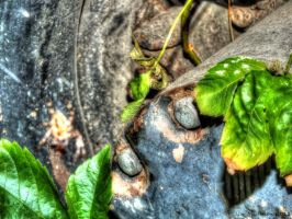 Nature wins 5 HDR by gogo100878