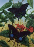 11. ASIAN SWALLOWTAILS-Original Watercolor Paintin by AllanSutherland