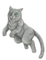 Grey cat by CelebrenIthil