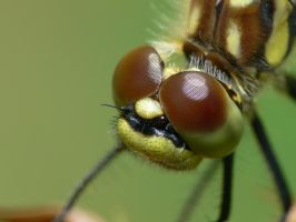 Dragonfly Macro 8 by Twitch1977