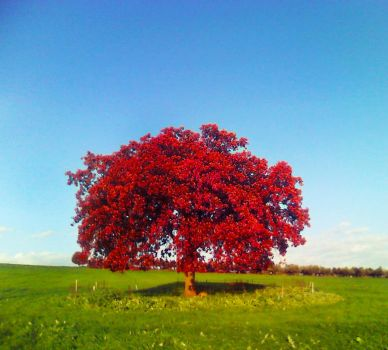 tree of hope by alis-fake-reflection