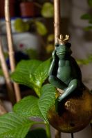 King of toads by Orwandil