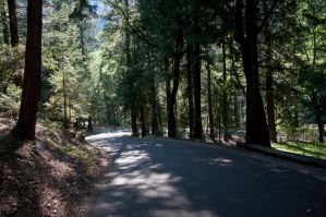 Road to Park Forrest by Lockstin