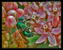 Another Green Bee by boron