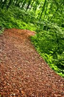 Red Ceder trail by ksouth