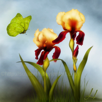 Spring Irises by SuliannH