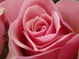 Roses 02 by jeannsaw