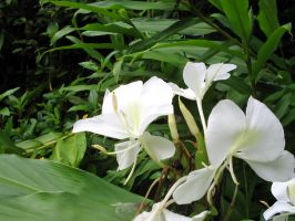 white orchid by CRStock