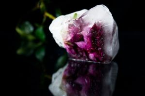 Frozen rose by iPingu