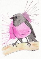 Pink Breasted Robin by IckyDog