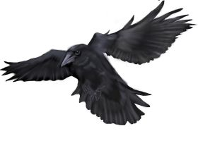 Flying Crow by 1two3four5six7