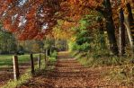 my way in the autumnal sun by Dieffi