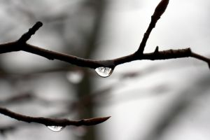 Tree in a droplet. by hegemonia
