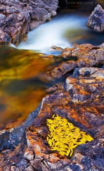 A Bowl Full of Fall by Jacob-Routzahn