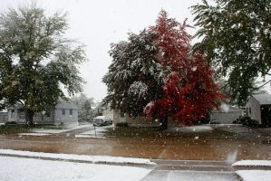 First Snow 2013 by olearysfunphotos