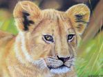 Lion Cub - pastel painting by theArtofsilviafrei