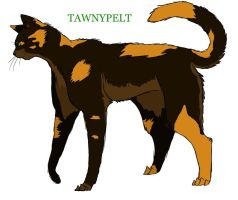 Tawnypelt by Lithestep
