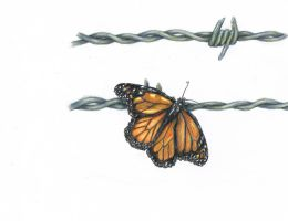 Hope: Butterfly on Barbed Wire by Kooky-Crumbs