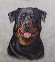 Rottweiler portrait by painterman33