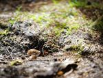 Spot the little peep oh by bexa