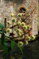 Gatehouse Conkers, To Be by EarthHart