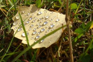 Drops on a dead leaf by ainoani