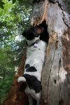 Tuuli in the Tree by RocksRose