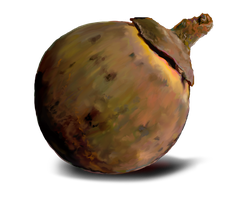 South American Sapote by emptypulchritude