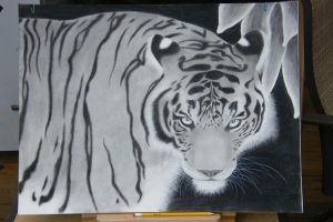 Tiger charcoal by NareeaShay