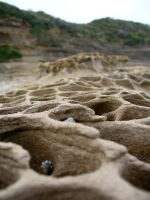 Beach Macro 1 by freespace