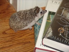 Thistle climps Mount Books by Hedgehog101