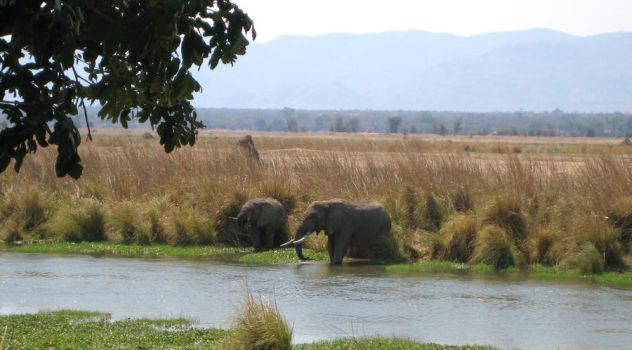 Elephants by the camp by R-Kealy